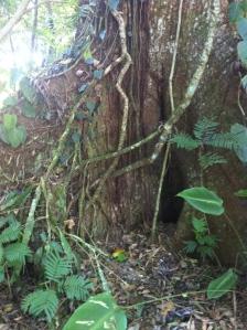 Sabo Tree
